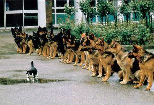 zelfvertrouwen geen angst